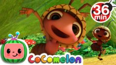 Ants Go Marching + More Nursery Rhymes & Kids Songs – CoCoMelon