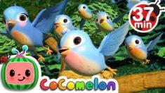 Five Little Birds 3 + More Nursery Rhymes & Kids Songs – CoCoMelon