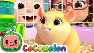 Class Pet Song   CoCoMelon Nursery Rhymes & Kids Songs