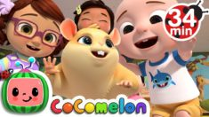 Class Pet Song | + More Nursery Rhymes & Kids Songs – CoCoMelon