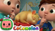 Class Pet Sleepover   CoComelon Nursery Rhymes & Kids Songs