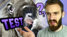 Are you Smarter than a Chimp? (TEST)