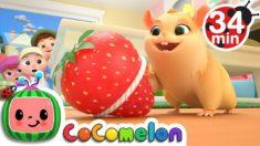 Lost Hamster + More Nursery Rhymes & Kids Songs – CoComelon
