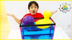 Learn Sink or Float Experiments For Kids with 1hr kids learning video!!