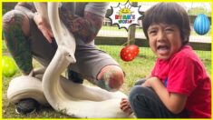 Ryan at the Farm on Easter Day Hunting for Eggs 1 hr kids video!!