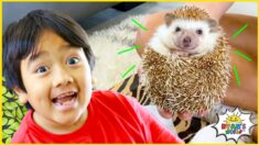 Ryan learns about Animals with 1 hr kids zoo and farm animals for kids!