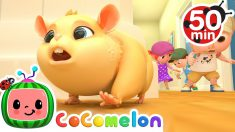 Lost Hamster Song + More Nursery Rhymes & Kids Songs – CoComelon