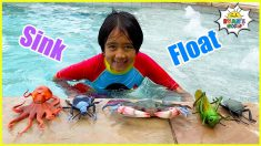 Sink or Float with 1 hr Easy Science Experiments for Kids | Ryan's World