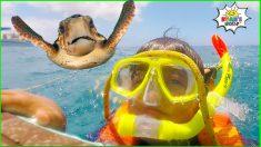 Ryan's Snorkeling in the Ocean with Turtles!