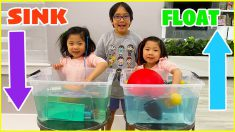 Sink or Float Easy kids Science Experiments to do at home!