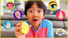 The Five Senses and more 1 hr kids educational learning video!